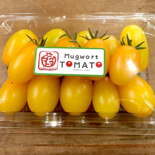 マグワートトマト取り扱いとまと「イエローアイコ」