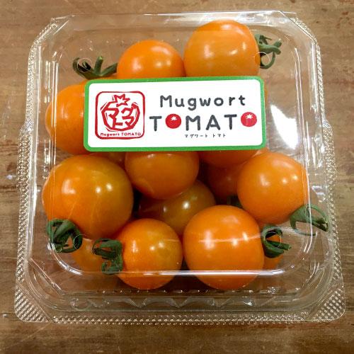 マグワートトマト取り扱いとまと「オレンジ千果」