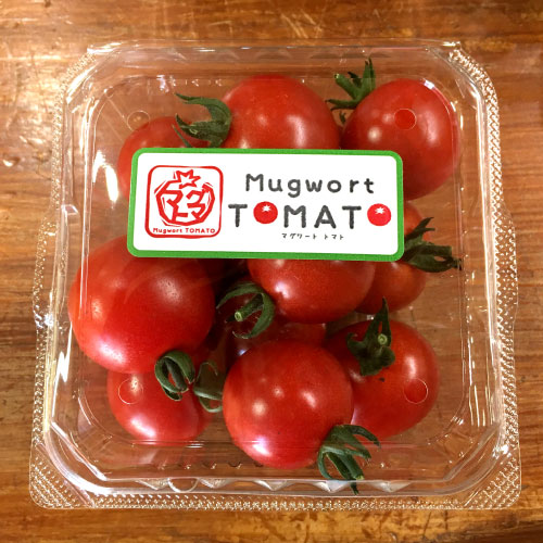 マグワートトマト取り扱いとまと「千果」
