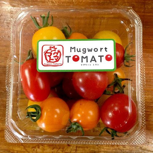 マグワートトマト取り扱いとまと「カラフルミニ」